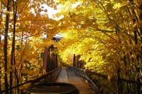 Walking bridge in Autum